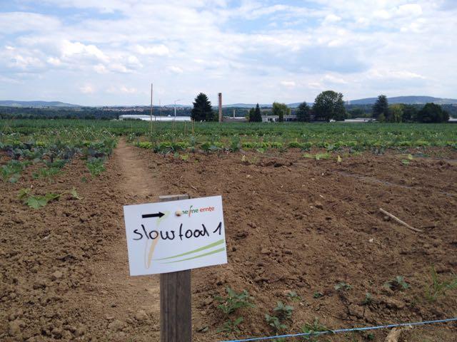 2015 MeineErnte Feld des Vegetarischen Kochstammtischs