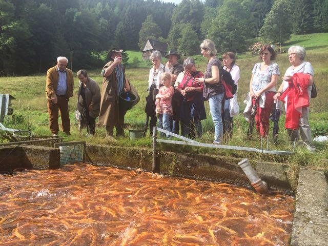 2014 Besuch der Forellenzucht Lohmühle im Schwarzwald